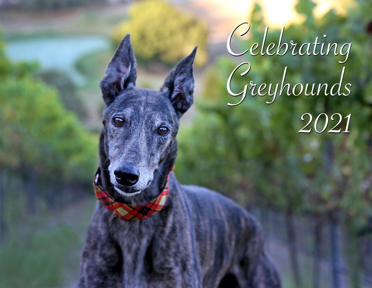 2019 Celebrating Greyhounds Wall Calendar